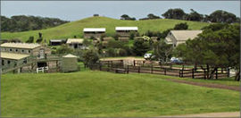 Ace Hi Riding Ranch - Accommodation Great Ocean Road