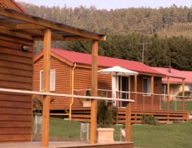Maydena Country Cabins Accommodation  Alpaca Stud - Accommodation Great Ocean Road