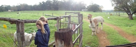 Boronia Farm Farmstay - Accommodation Great Ocean Road