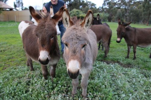 Donkey Tales Farm Cottages - Accommodation Great Ocean Road