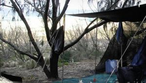 Main Beach Foreshore Camping Grounds - Accommodation Great Ocean Road