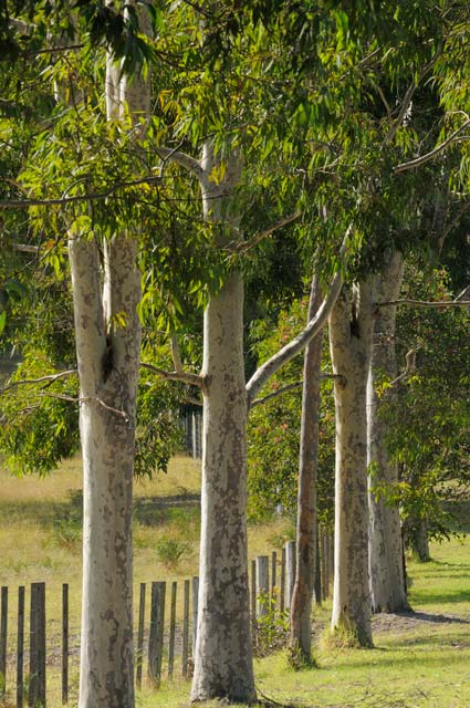 Stringybark Cottages - Accommodation Great Ocean Road