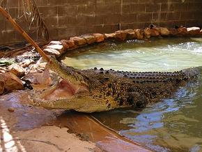 Wyndham Zoological Gardens and Crocodile Park - Accommodation Great Ocean Road