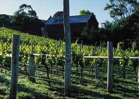 Goona Warra Vineyard - Accommodation Great Ocean Road