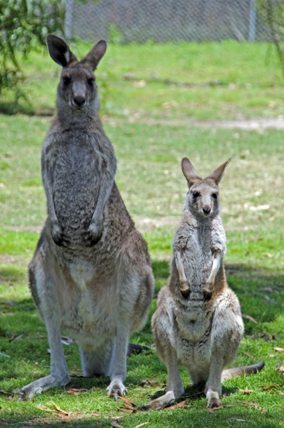 Potoroo Palace - Accommodation Great Ocean Road