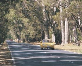 Ludlow Tuart Forest - Accommodation Great Ocean Road