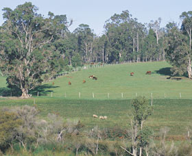 Scenic Drives - Bunbury Collie Donnybrook