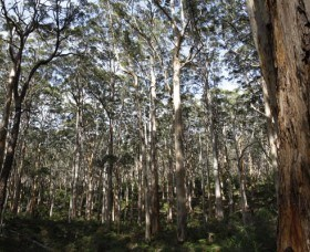 Boranup Karri Forest - Accommodation Great Ocean Road