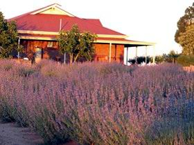 Bella Lavender Estate - Accommodation Great Ocean Road