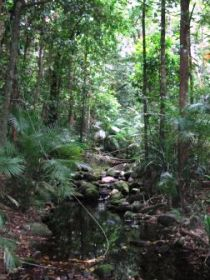 Mossman Gorge Rainforest Circuit Track Daintree National Park - Accommodation Great Ocean Road