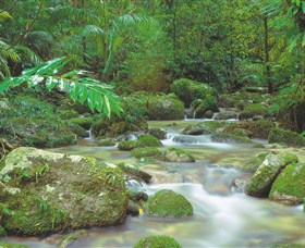 Mossman Gorge Daintree National Park - Accommodation Great Ocean Road