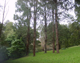 Mount Dandenong Arboretum - Accommodation Great Ocean Road
