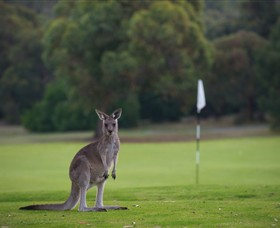 Anglesea Golf Club - Accommodation Great Ocean Road