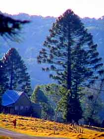 Bunya Mountains National Park - Accommodation Great Ocean Road