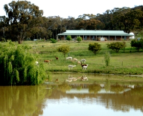 Clearview Alpacas - Accommodation Great Ocean Road