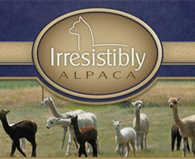 Marchmont Park Alpacas - Accommodation Great Ocean Road