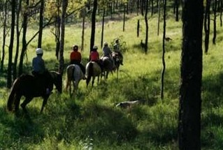Hunter Valley Horse Riding and Adventures - Accommodation Great Ocean Road