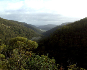 Nattai Gorge Lookout - Accommodation Great Ocean Road