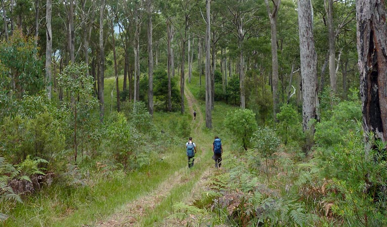 The Green Gully track - Accommodation Great Ocean Road