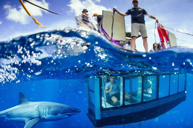 White Shark Tour with Optional Cage Dive from Port Lincoln - Accommodation Great Ocean Road