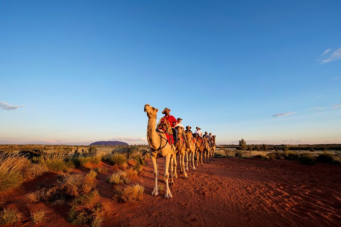 Uluru Camel Express Sunrise or Sunset Tours - Accommodation Great Ocean Road
