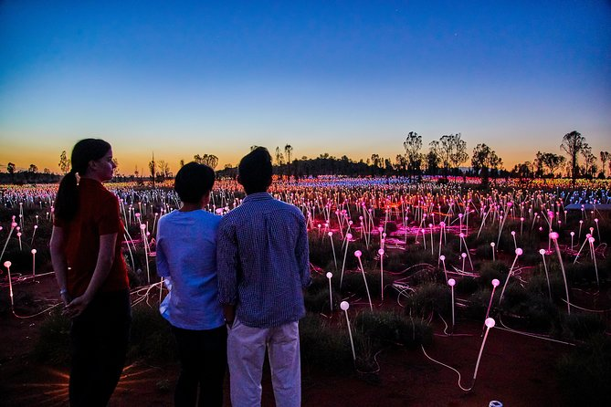 Uluru Field of Light Sunrise Tour - Accommodation Great Ocean Road