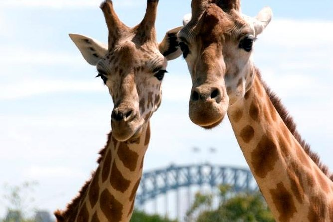 Sydney Harbour Ferry with Taronga Zoo Entry Ticket - Accommodation Great Ocean Road