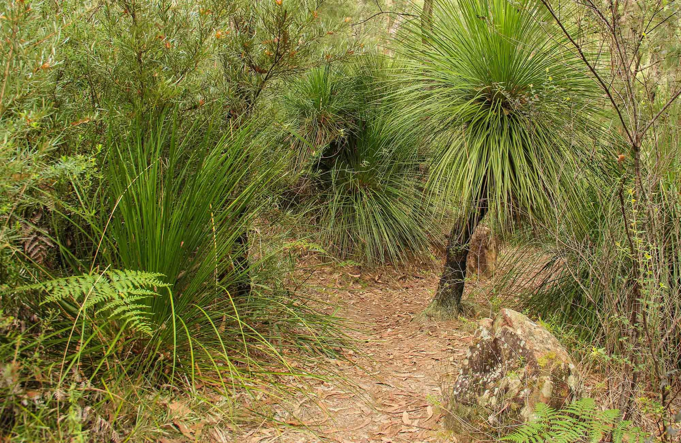 Grass Tree Circuit - Accommodation Great Ocean Road