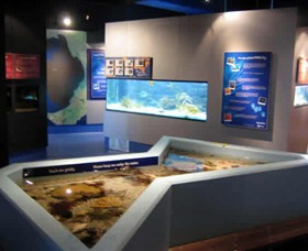 Marine and Freshwater Discovery Centre - Accommodation Great Ocean Road