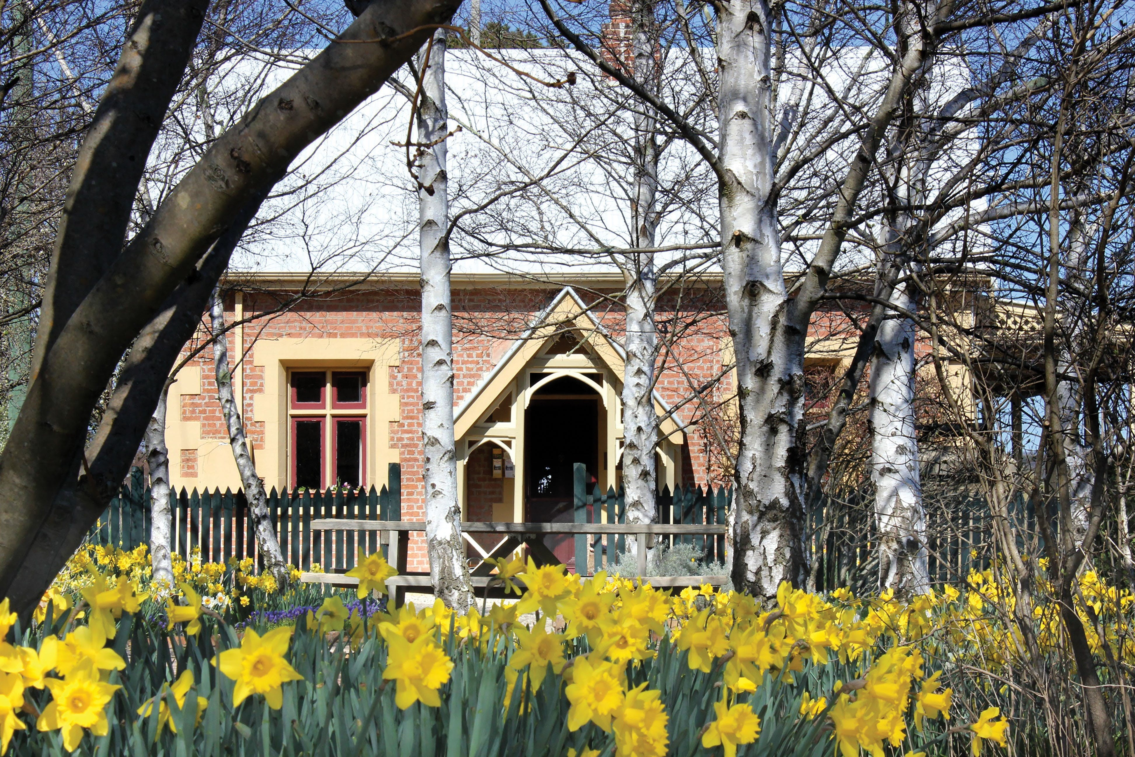 Daffodils at Rydal - Accommodation Great Ocean Road